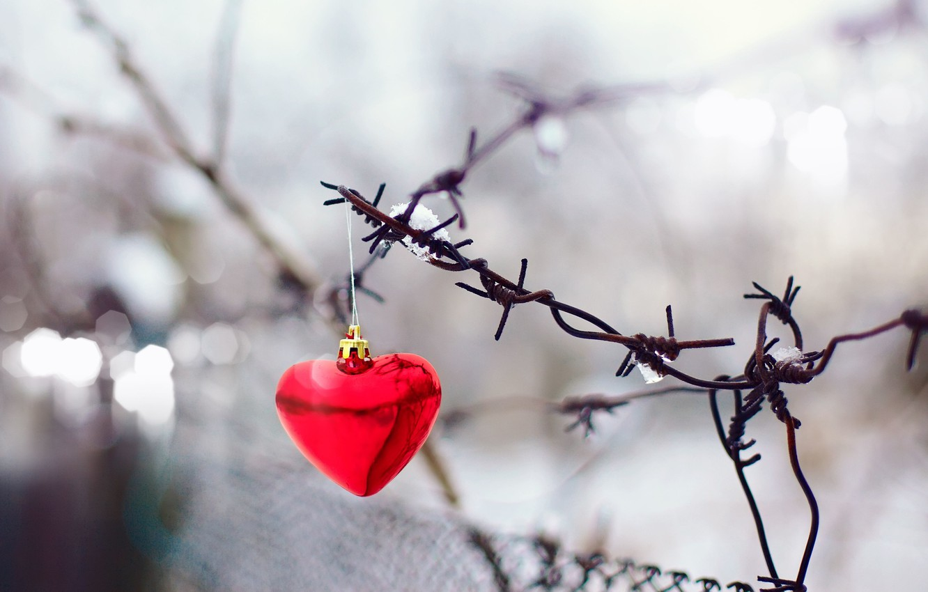 Photo wallpaper background, mesh, holiday, widescreen, Wallpaper, the fence, blur, gate, wallpaper, form, red, holidays, red, heart, …