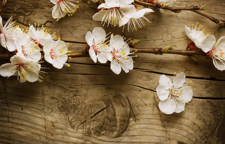 Photo wallpaper tree, Board, branch, Board, Apple