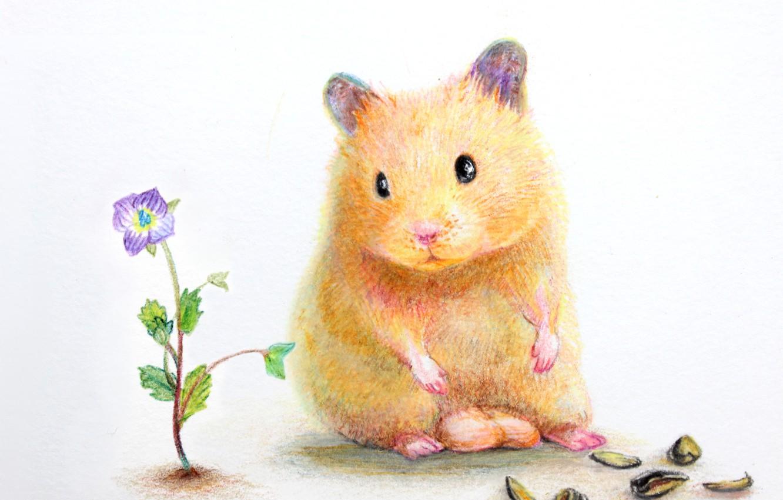 Photo wallpaper flower, hamster, shell