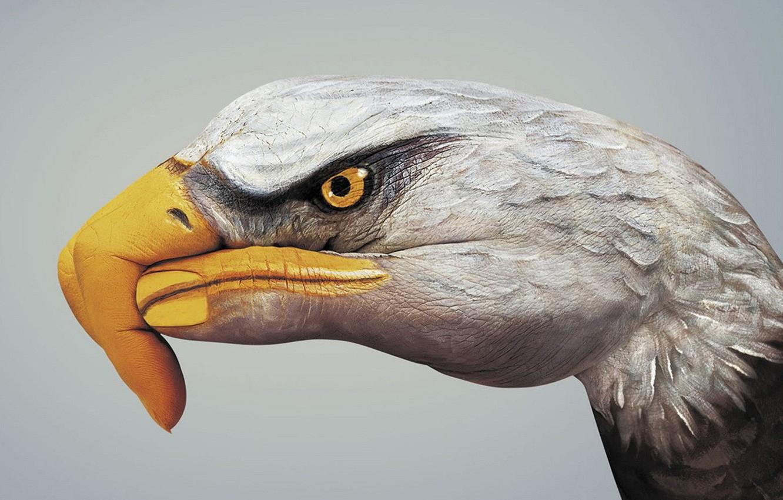 Photo wallpaper eagle, paint, hand