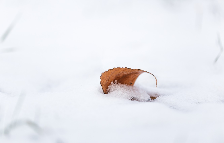 Photo wallpaper autumn, snow, sheet