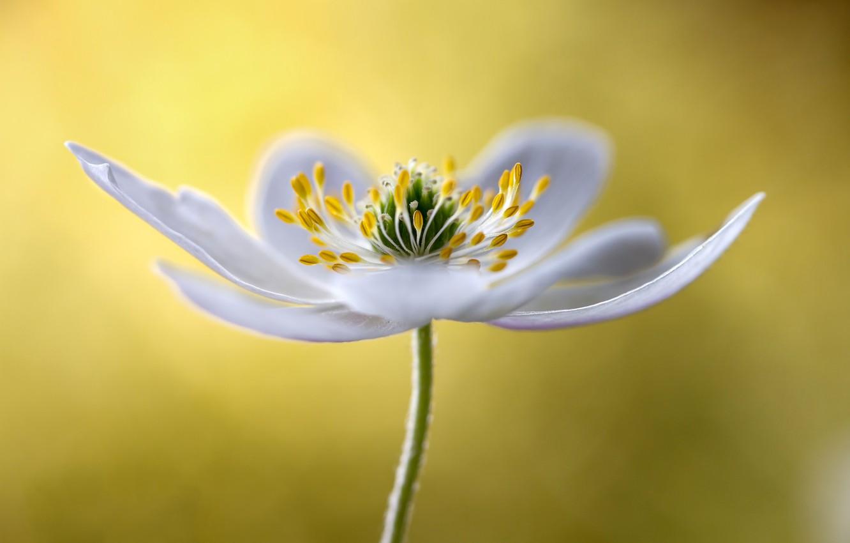 Photo wallpaper flower, nature, petals, stamens