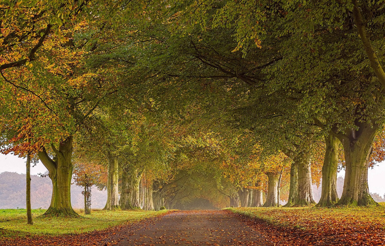 Photo wallpaper road, autumn, leaves, trees, England, alley, England, North Dorset, North Dorset