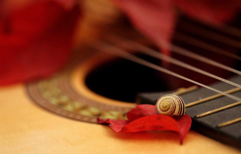 Photo wallpaper macro, guitar, snail