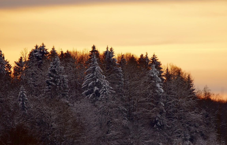 Photo wallpaper winter, forest, trees, landscape, sunset, nature