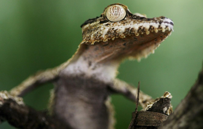 Photo wallpaper eyes, tree, Gecko