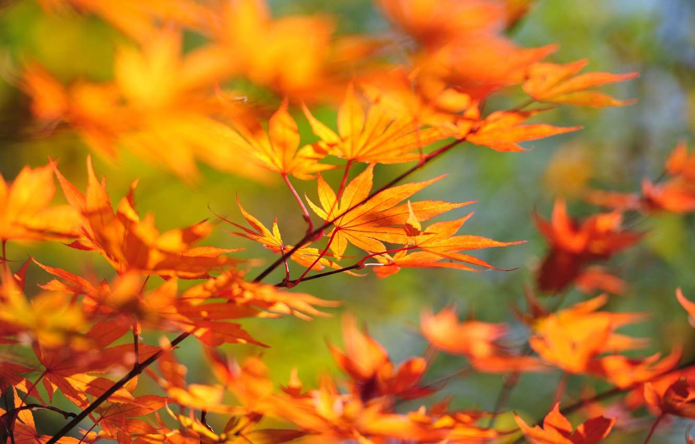 Photo wallpaper Tree, Japan, Branch, 6048 x 4032