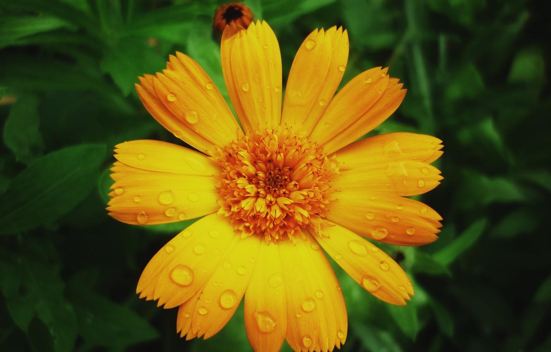 Wallpaper Summer Rain Flower Images For Desktop Section