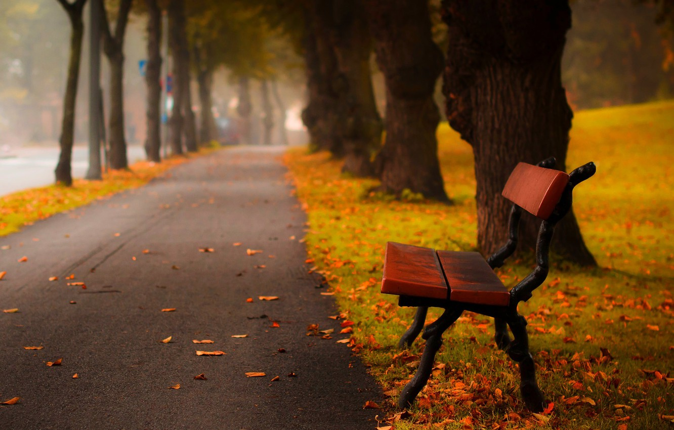 Photo wallpaper autumn, forest, grass, leaves, trees, bench, nature, Park, colors, hdr, grass, walk, forest, road, trees, …