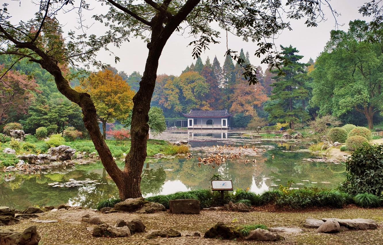 Photo wallpaper grass, trees, pond, stones, garden, China, the bushes, Hangzhou Botanical Garden