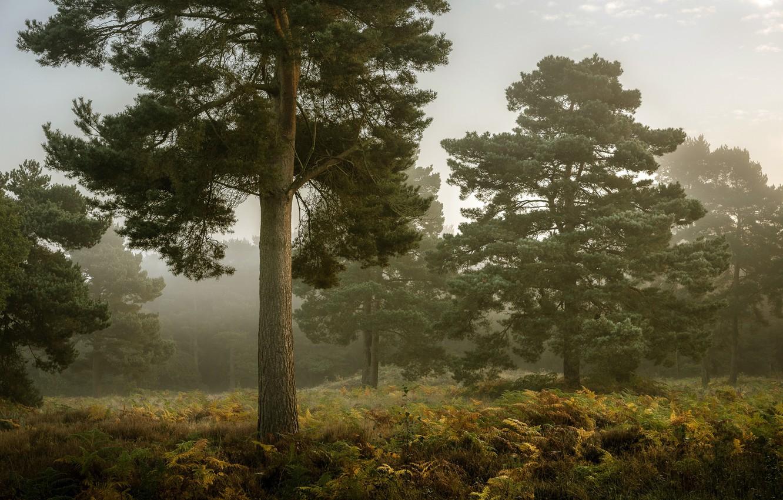 Photo wallpaper autumn, forest, fog, tree