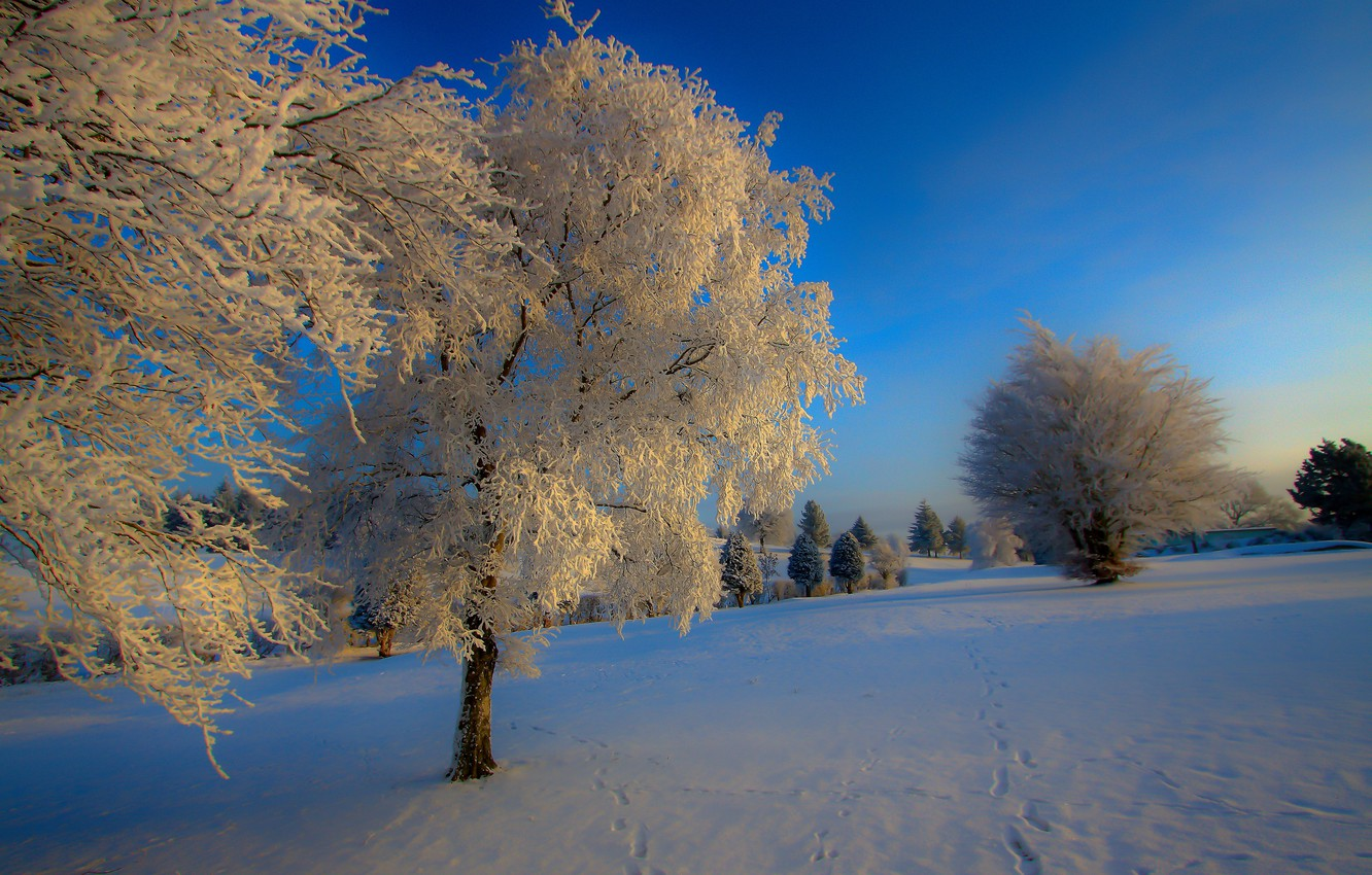 Photo wallpaper winter, snow, nature, blue, tree
