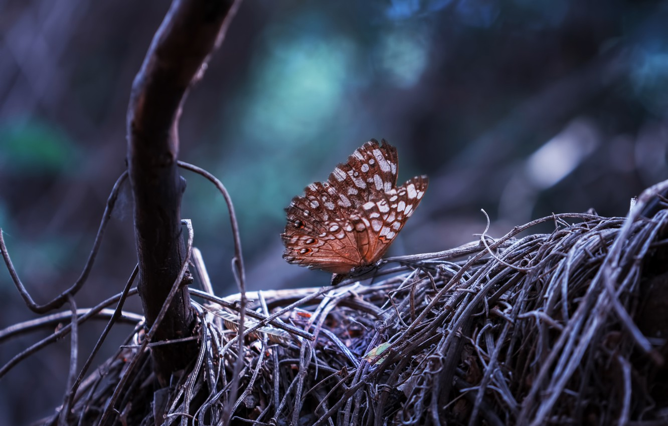 Photo wallpaper forest, nature, tree, Butterfly