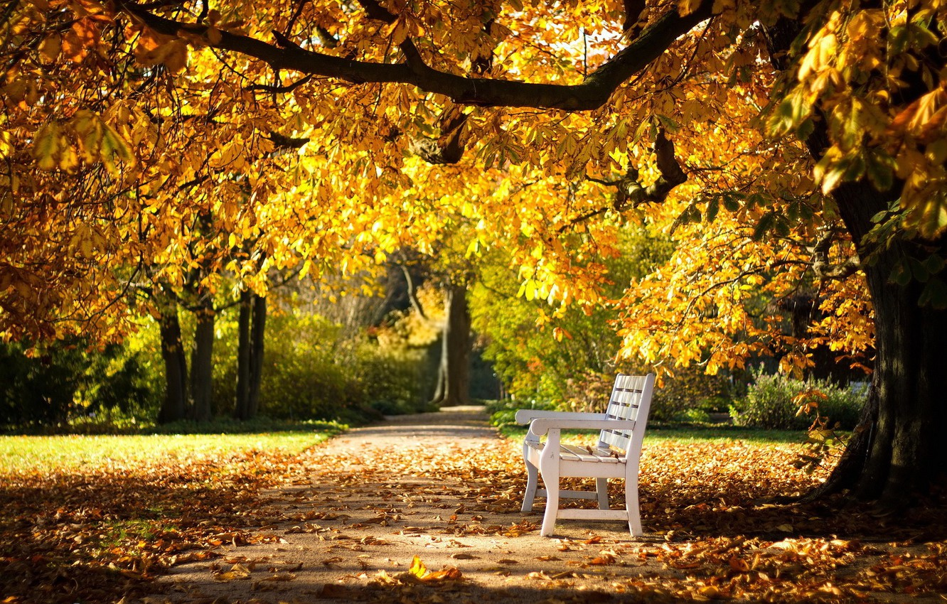 Photo wallpaper track, falling leaves, bench, autumn Park