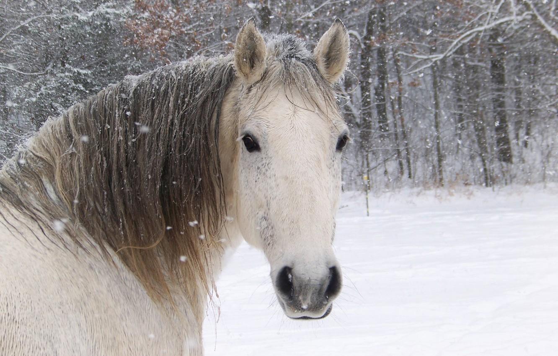 Wallpaper White Face Horse Horse Images For Desktop Section Zhivotnye Download