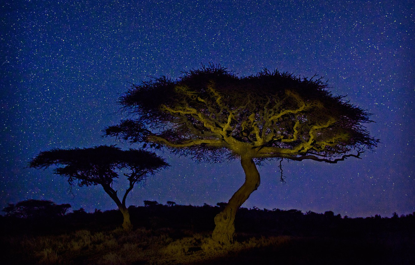 Photo wallpaper stars, light, night, tree, Africa, acacia, Kenya, Wildlife Conservancy