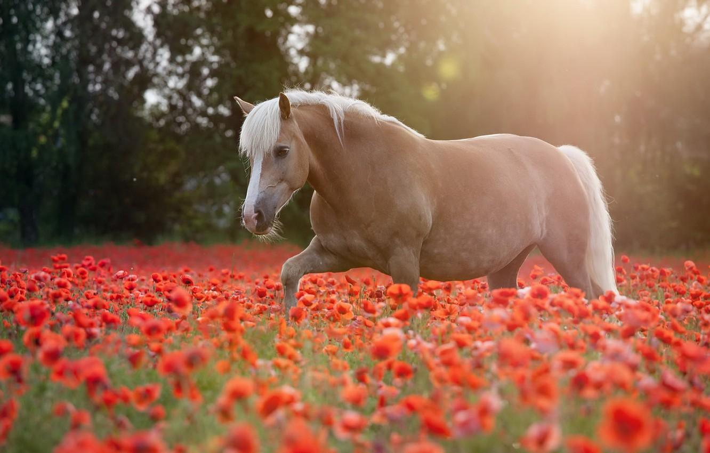 Photo wallpaper summer, horse, Maki