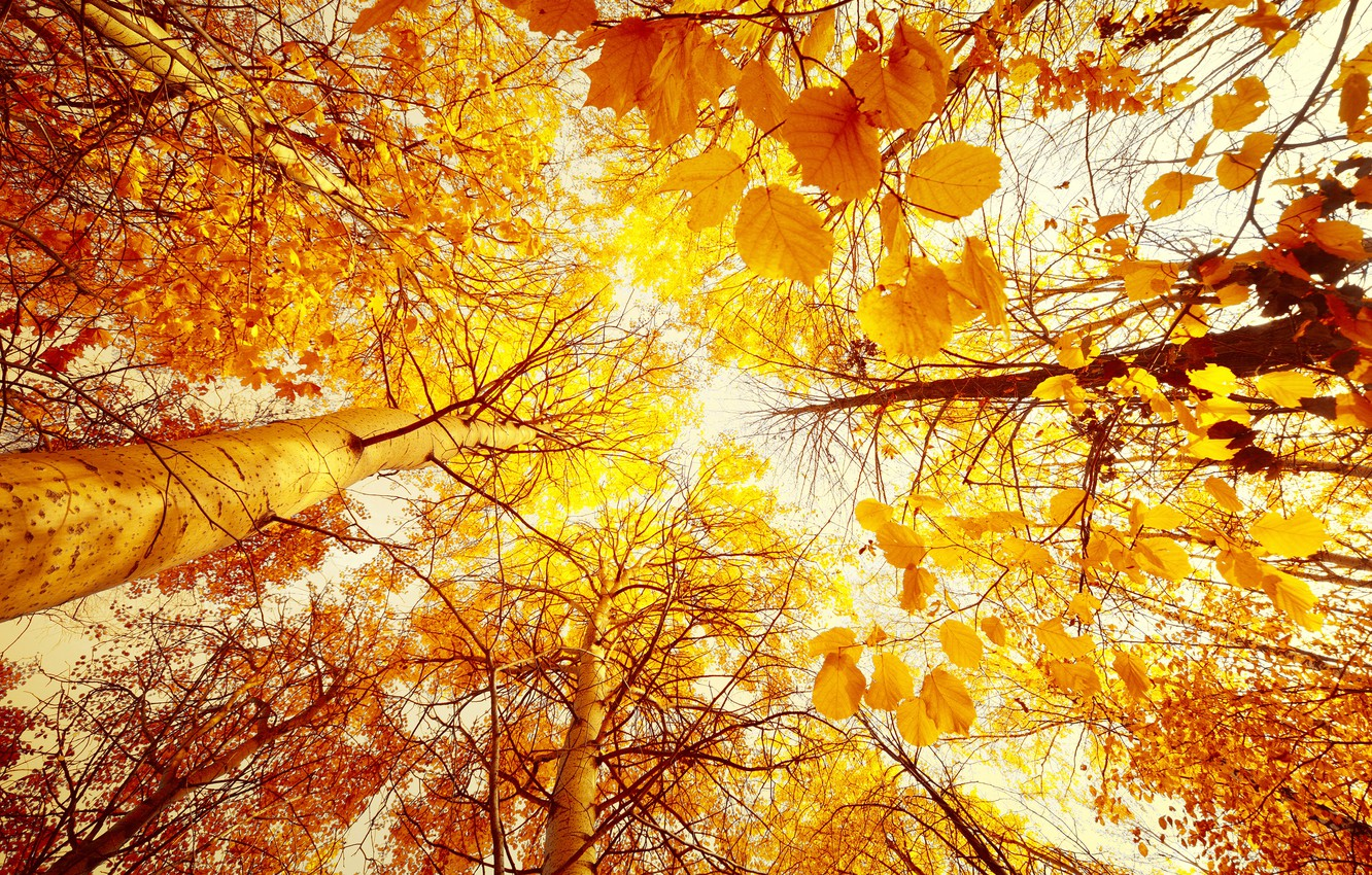 Photo wallpaper autumn, forest, the sky, leaves, the sun, trees, landscape, yellow, from the bottom up