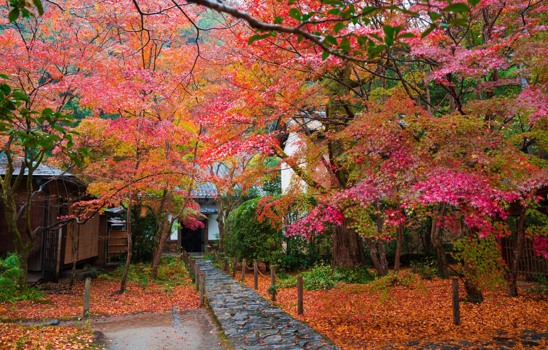 Photo wallpaper autumn, leaves, trees, house, Japan, garden, track