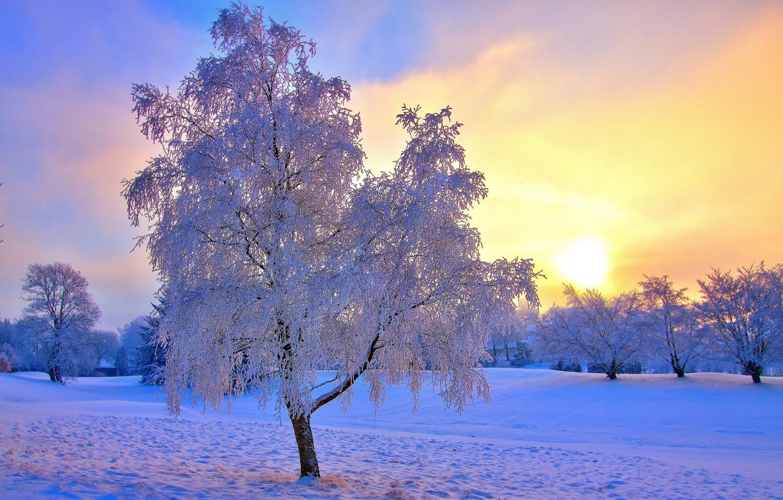 Photo wallpaper winter, frost, the sky, the sun, snow, trees, haze
