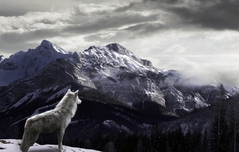 Photo wallpaper snow, mountains, fog, Wolf