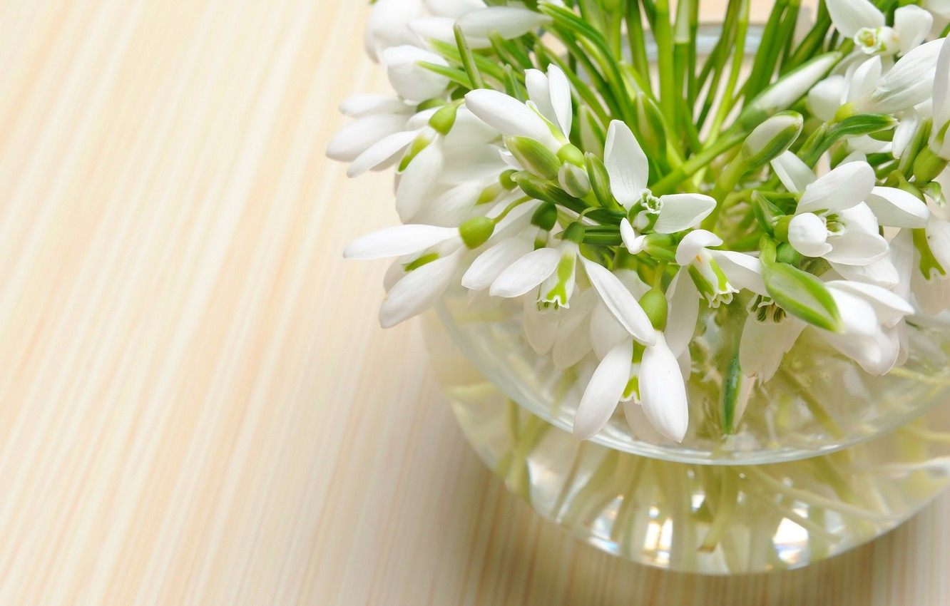Photo wallpaper flower, flowers, nature, bouquet, spring, snowdrops, spring