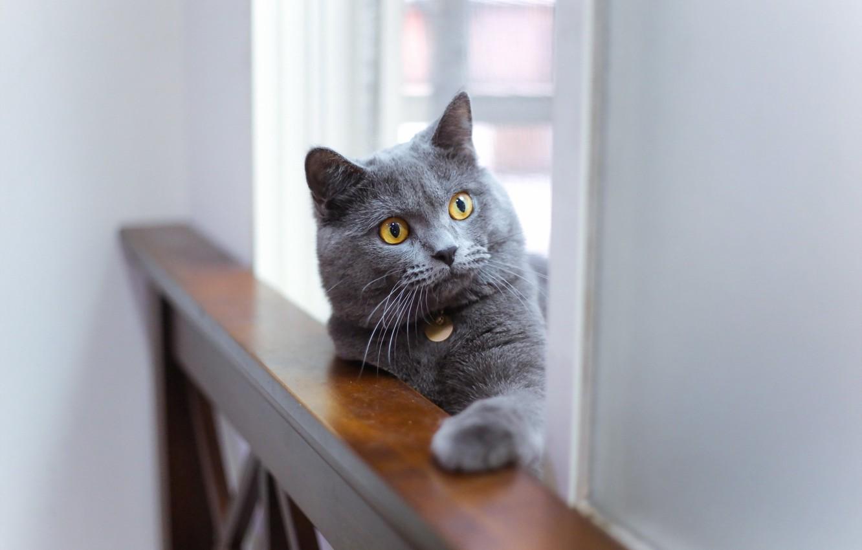 Photo wallpaper cat, look, background