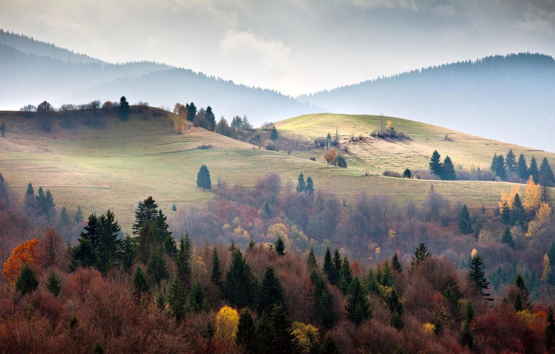 Photo wallpaper forest, trees, mountains, ate, Ukraine, Carpathians
