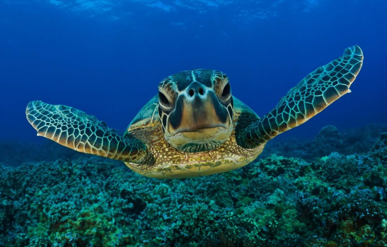 Wallpaper Underwater Sea Life Turtle Images For Desktop