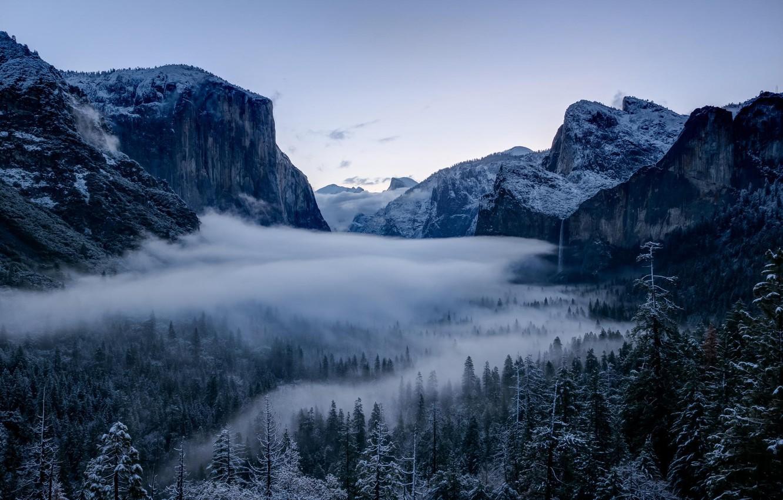 Wallpaper Winter Forest Trees Valley Ca California