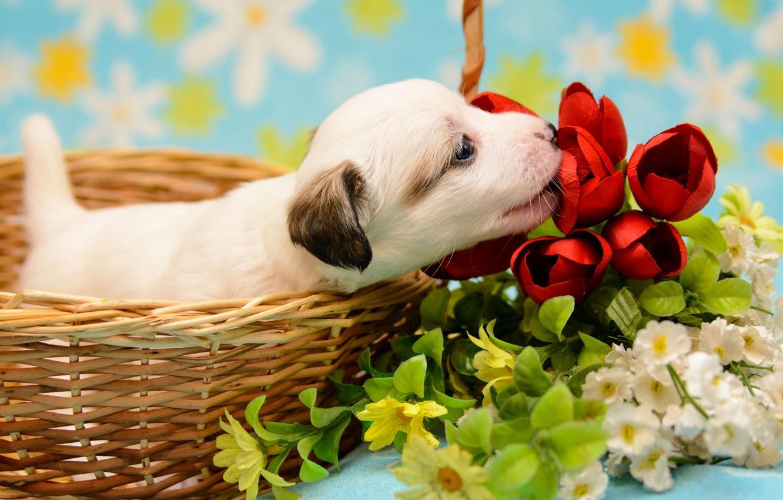Photo wallpaper flowers, basket, baby, puppy