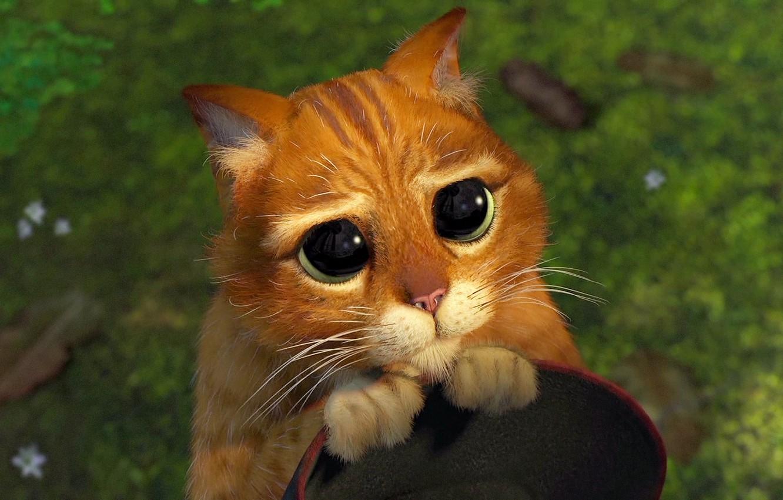 Photo wallpaper cat, Shrek, pity, cartoon