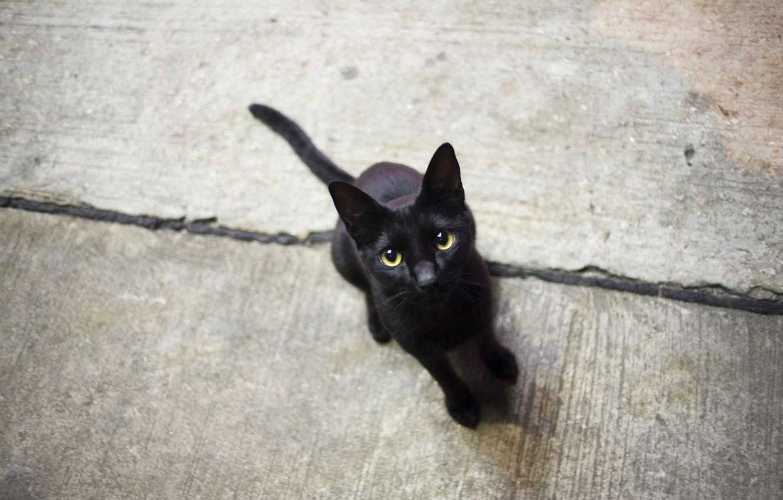 Photo wallpaper cat, eyes, cat, black