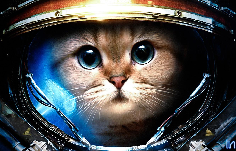 Photo wallpaper cat, the suit, starcraft