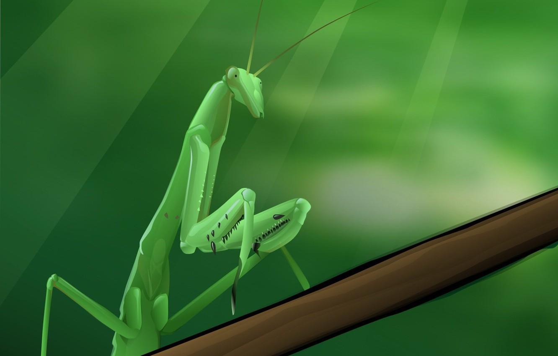 Photo wallpaper Greens, vector, mantis