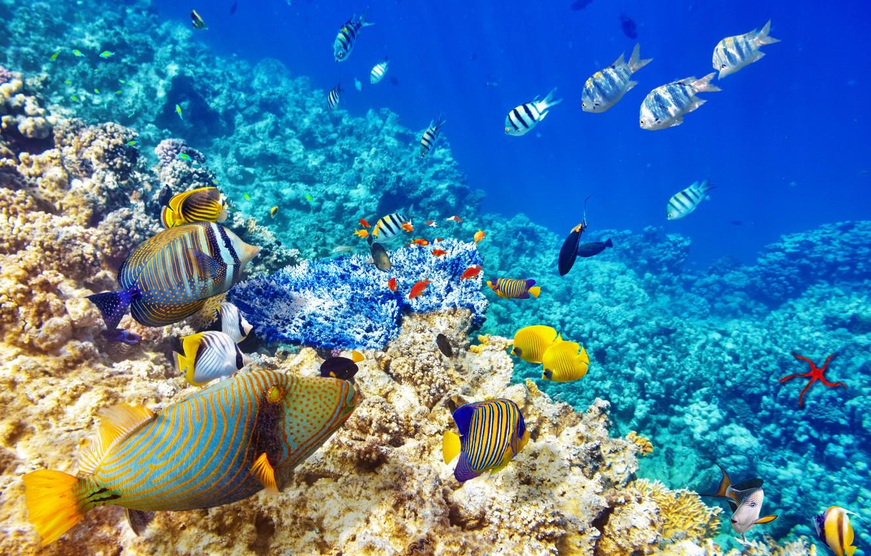 Wallpaper Fish The Ocean World Underwater World Underwater