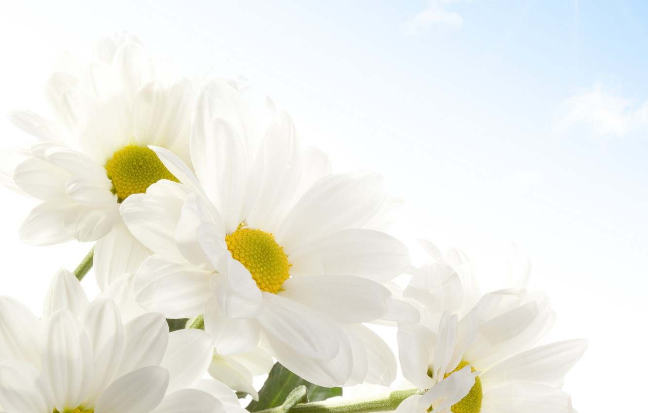 Photo wallpaper clouds, flowers, chamomile