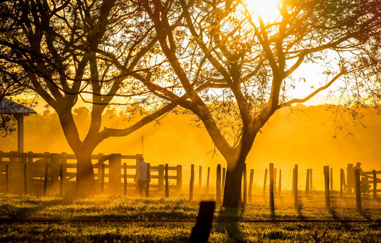 Photo wallpaper light, trees, sunset, sunlight, ranch