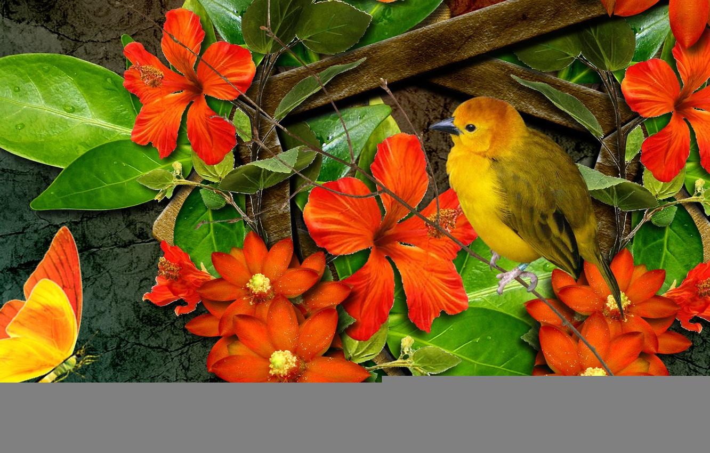 Photo wallpaper flowers, collage, bird, butterfly