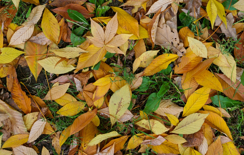 Photo wallpaper green, yellow, autumn, leaf