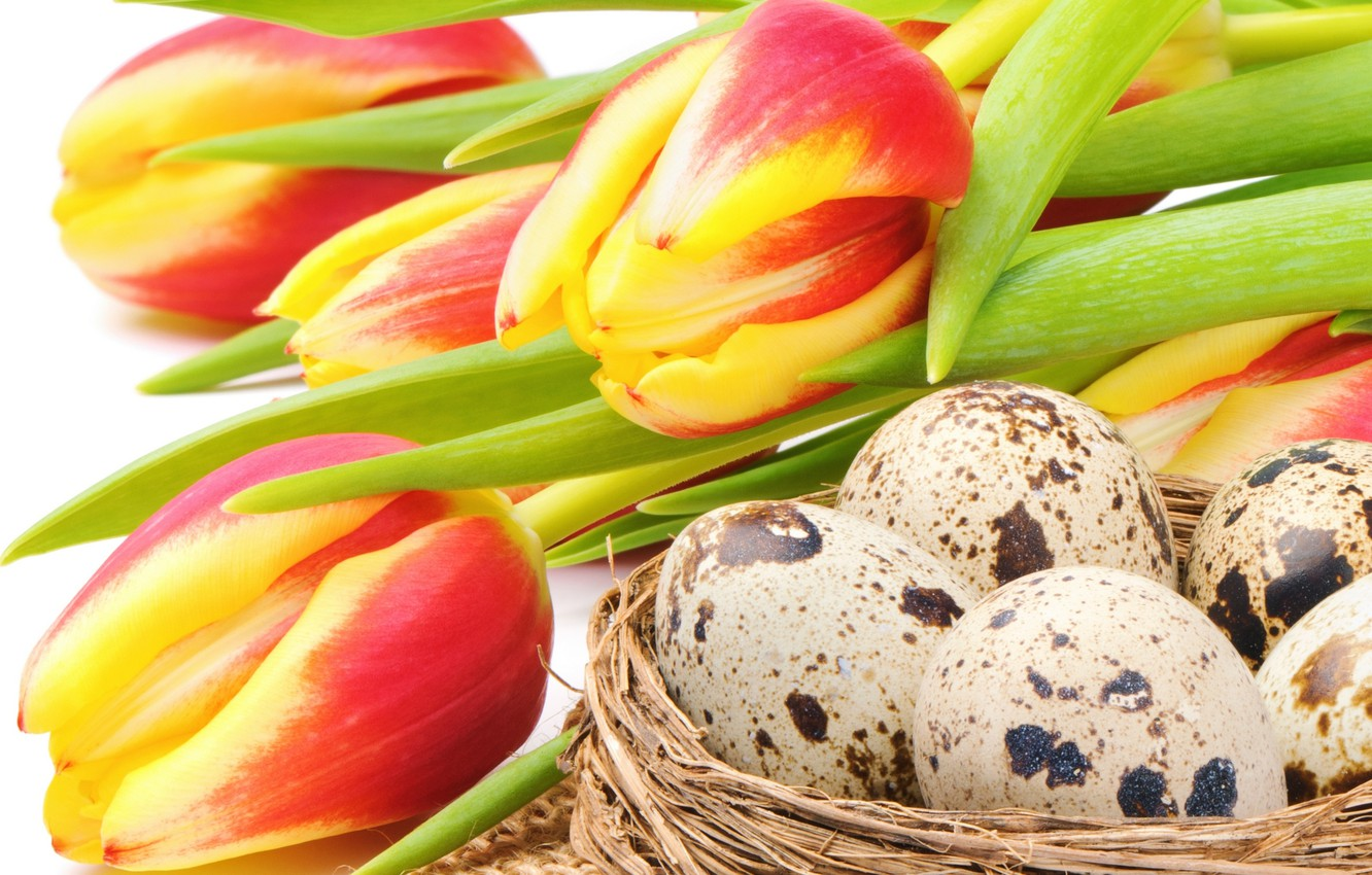 Photo wallpaper flowers, holiday, eggs, Easter, socket, tulips, red, yellow, flowers, tulips, Easter, eggs, holiday, bouquet, nest, …