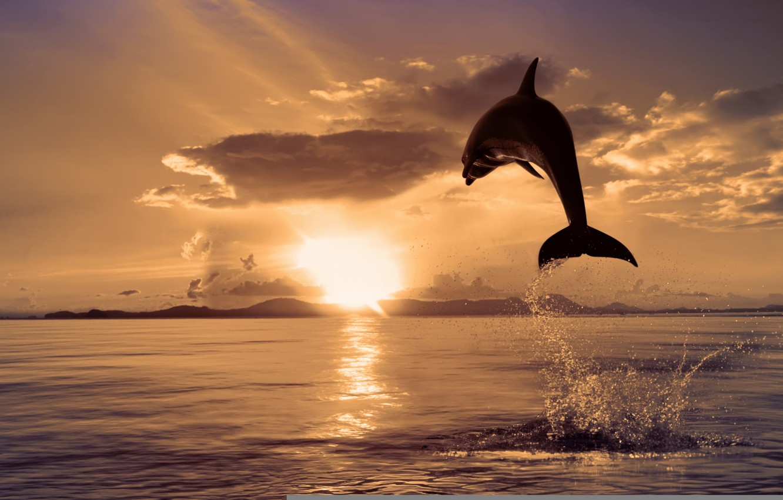 Photo wallpaper sea, nature, Dolphin, jump, color