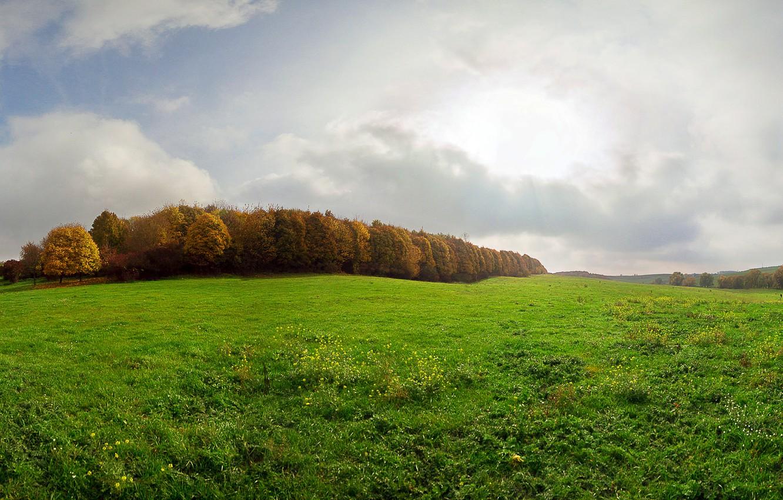 Photo wallpaper autumn, grass, glade, Ukraine, Dergachev, Dergachov