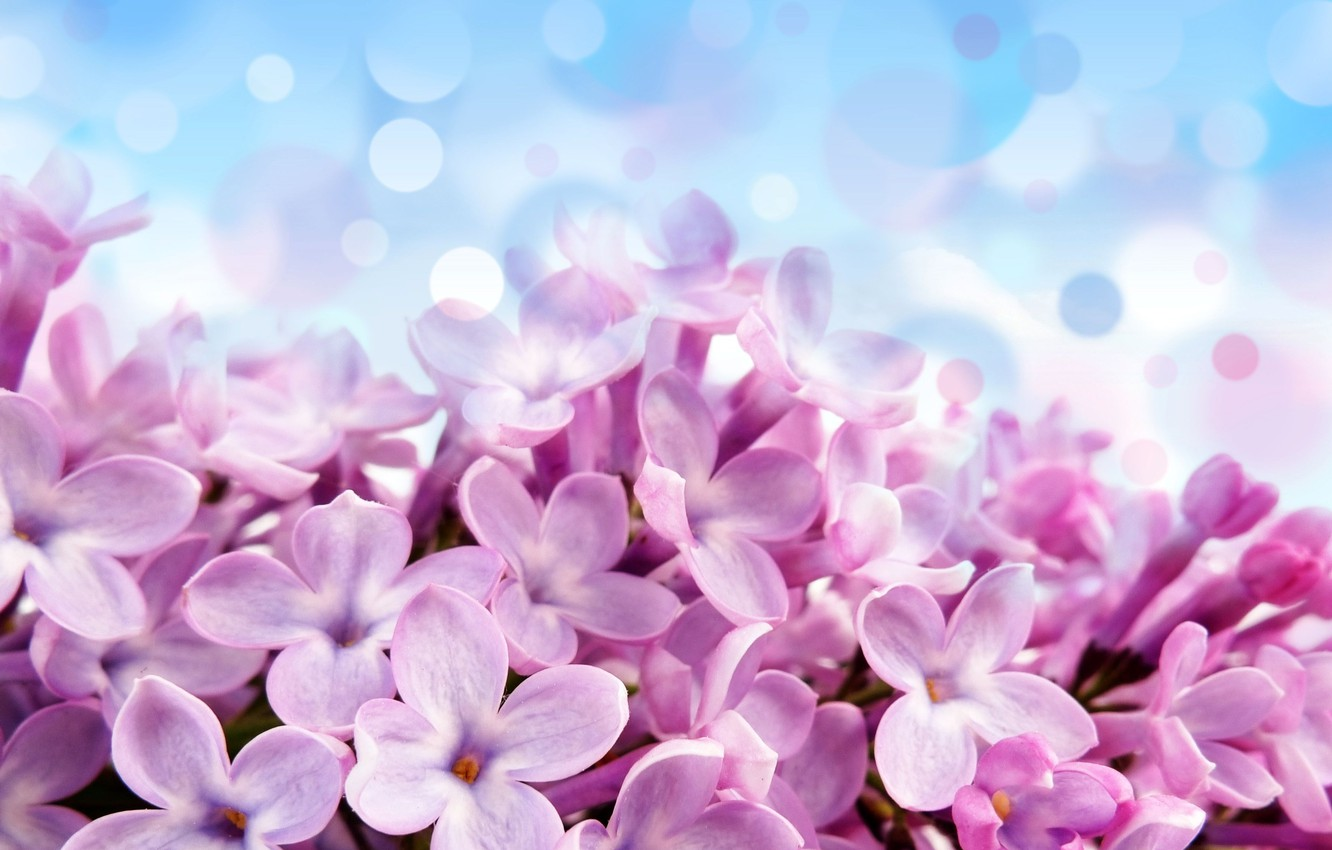 Photo wallpaper flowers, glare, background, blue, beautiful, purple, Pale red-violet flowers