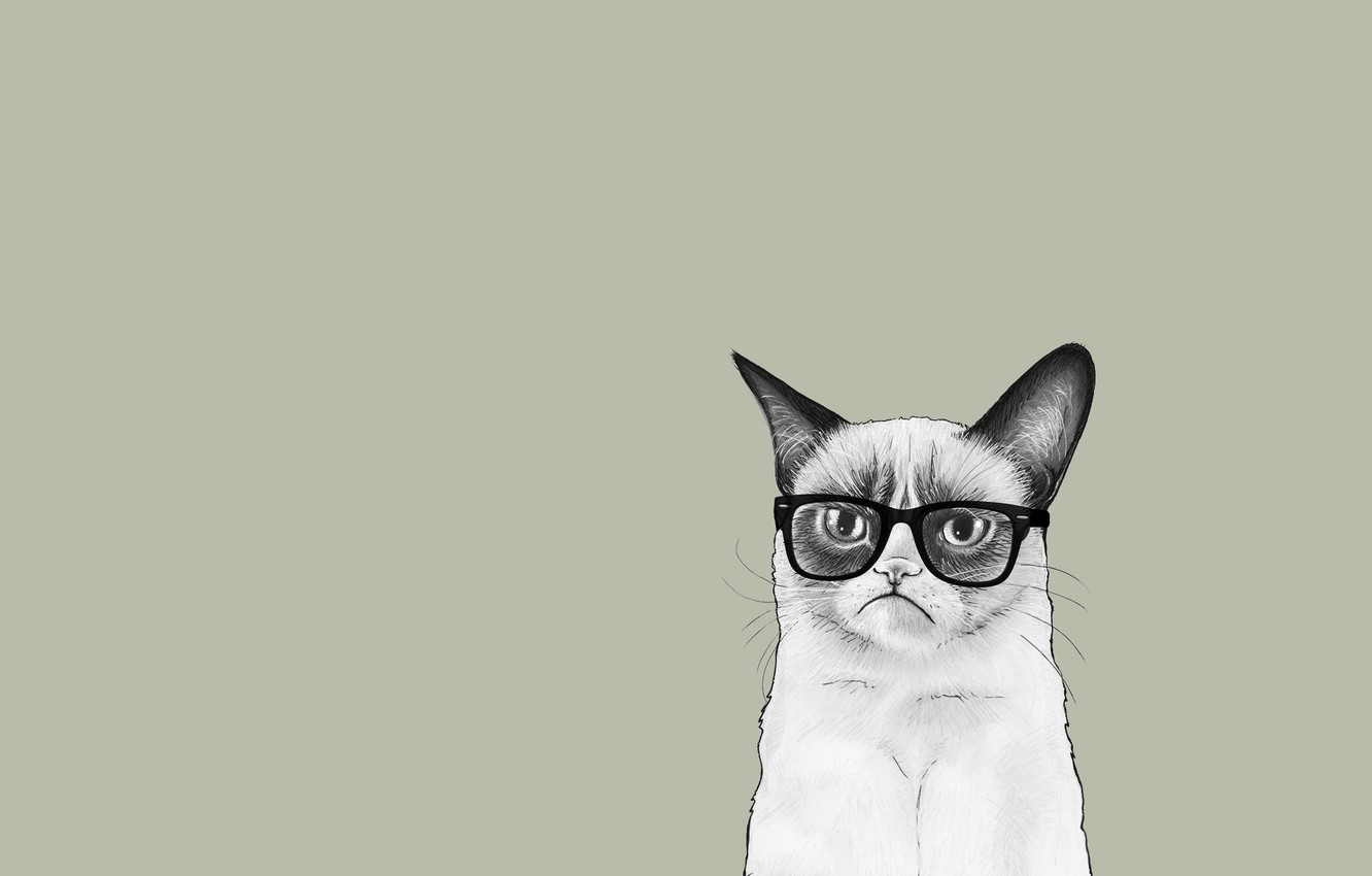 Photo wallpaper cat, cat, minimalism, glasses, Tartar Sauce, Grumpy Cat, Tardar Sauce, Grumpy Cat