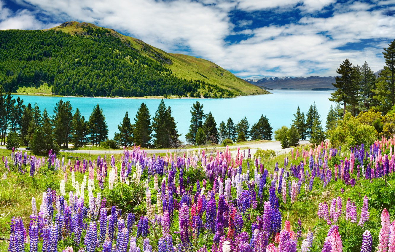 Photo wallpaper forest, the sky, clouds, trees, landscape, mountains, lake, blue, mountains, lavender, Lavander