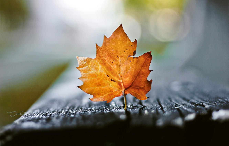 Photo wallpaper autumn, macro, sheet, bokeh