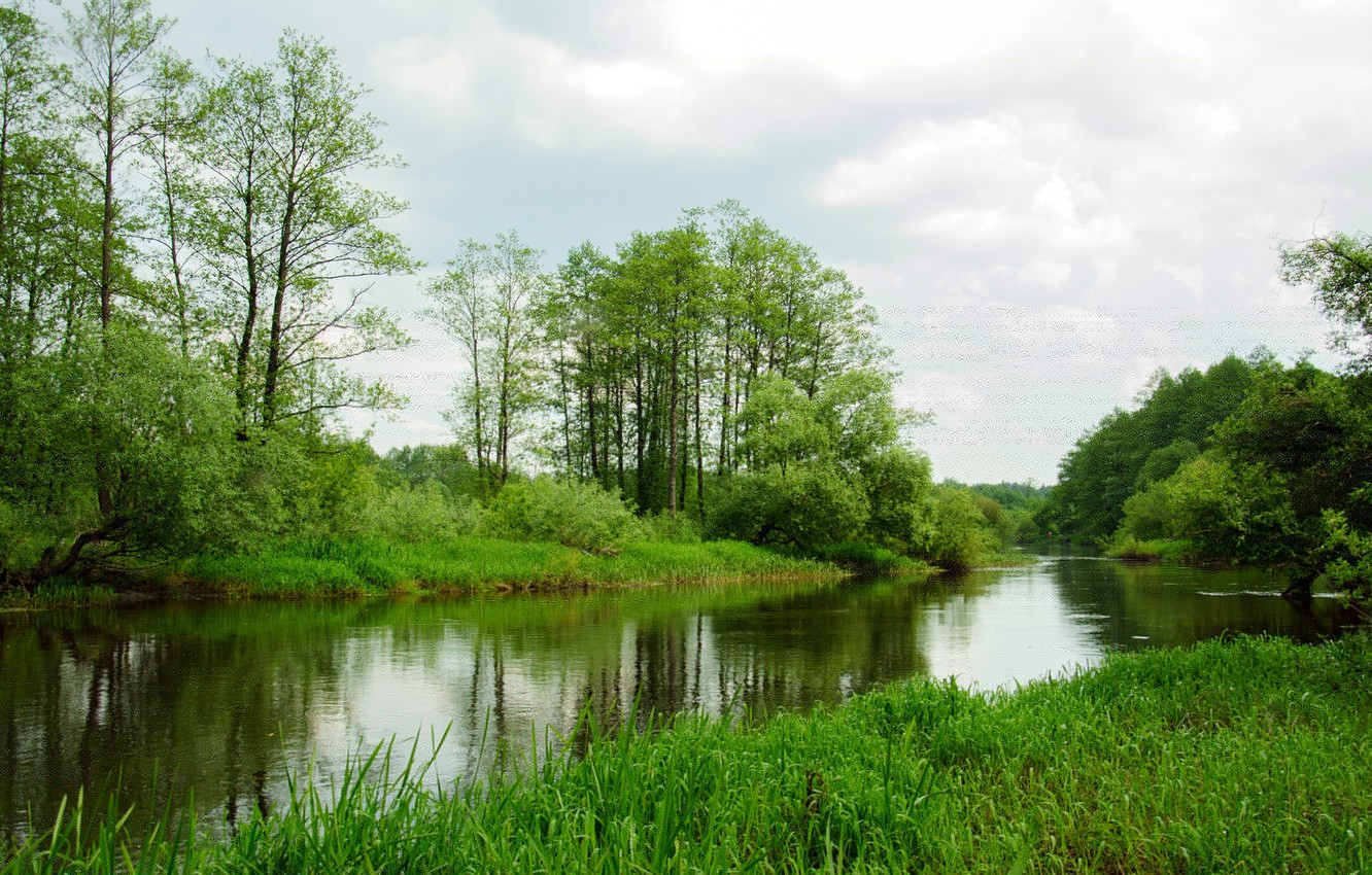 Photo wallpaper greens, forest, grass, trees, the reeds, shore, river, the bushes