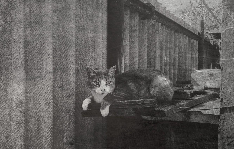 Photo wallpaper cat, retro, Wallpaper