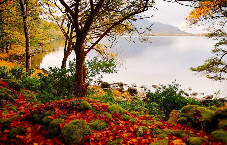 Photo wallpaper autumn, forest, mountains, lake